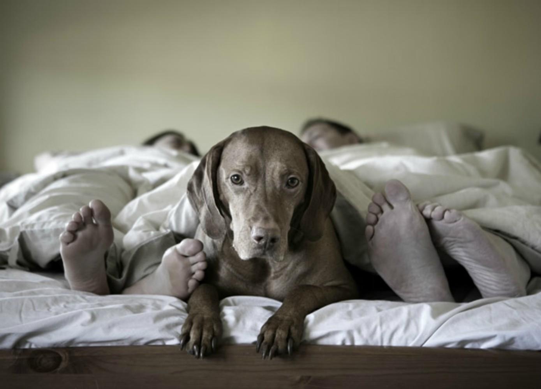 compartir cama con perro