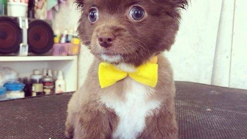 vídeos más vistos de cachorros
