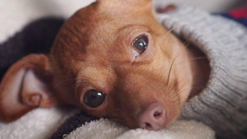 Razones por las que un perro tiembla | Cómo educar a un cachorro