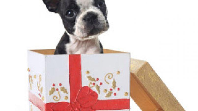 regalar un cachorro o perro