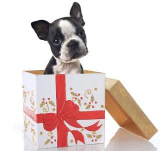 regalar un perro