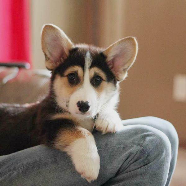 secreto del vínculo entre perros y humanos
