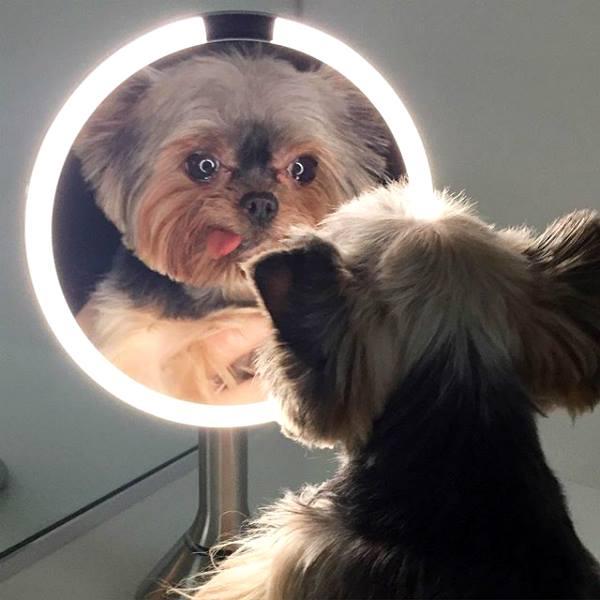perros y espejos