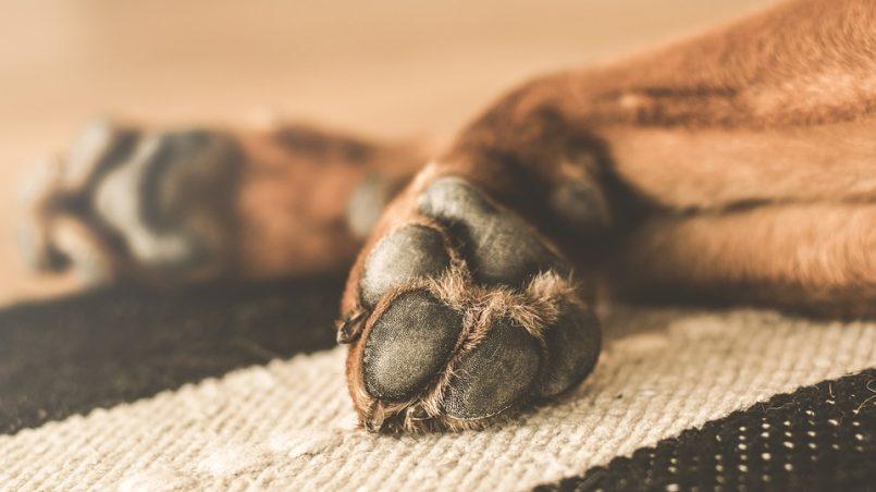 cortar las uñas al perro