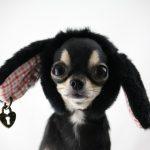 razas de perros más pequeñas