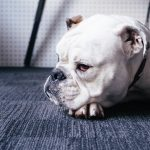 mejorar el comportamiento del perro