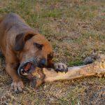 dieta para perro
