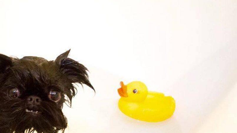 perros posesivos con sus juguetes