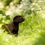 cachorro come pasto o hierba