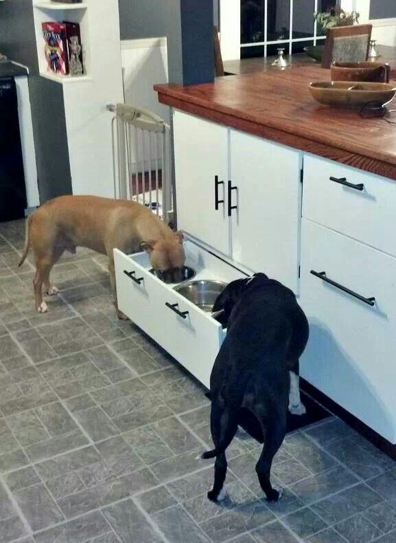 comedor para perros