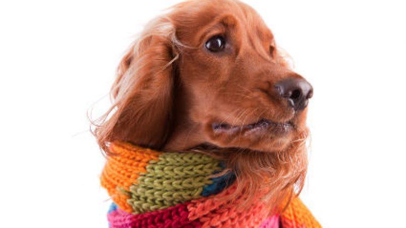 gripe en cachorros