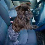 viajar en coche con el perro