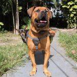 educar a un perro guardián