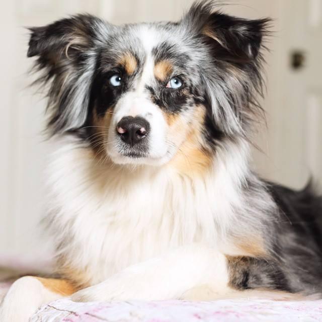 prolonga la vida de tu perro