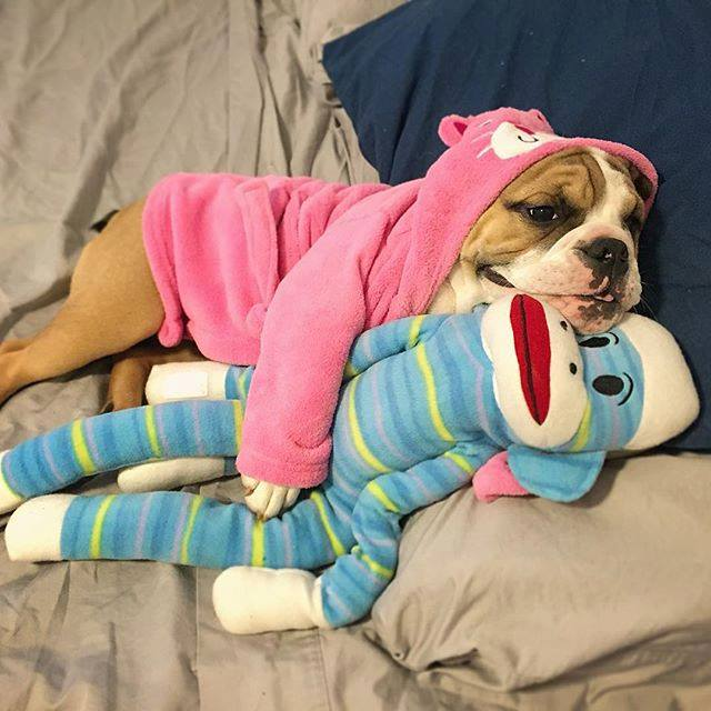 juguetes seguros para perros