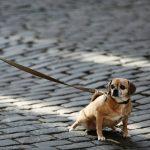 a que edad levantan los perros la pata para orinar