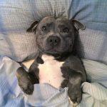 dormir o no dormir con tu perro