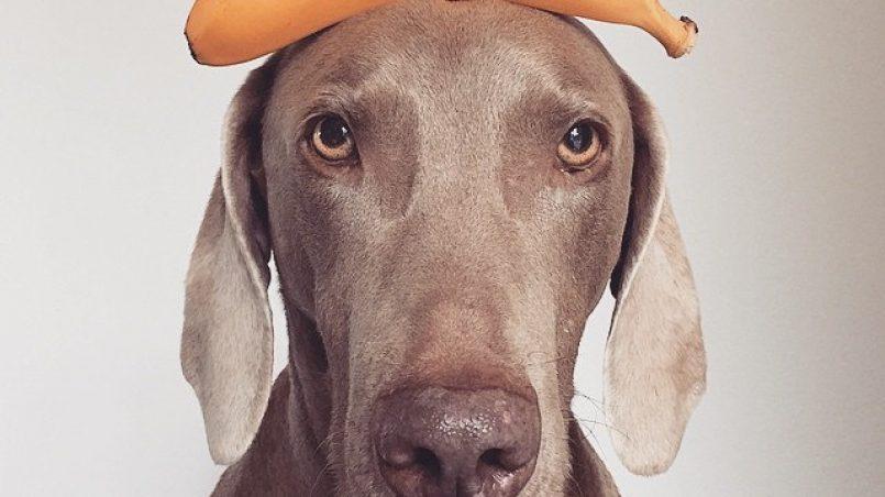 10 alimentos que previenen el cáncer en perros