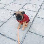 estudio abandono de perros 2016