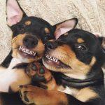 boca de los perros más limpia que la humana