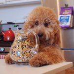 educar a un cachorro a comer