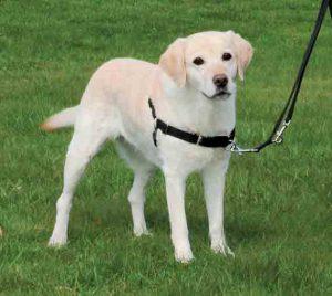 mejor collar para perros