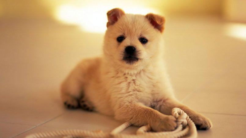 mejores juguetes para cachorros