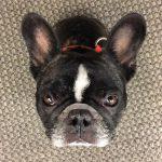 perros entienden palabras y emociones