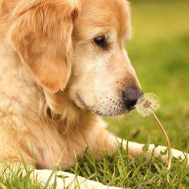 plantas para una casa con perros