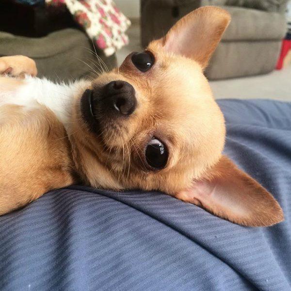 salud de los oídos del perro