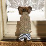 perros y timbres de las puertas
