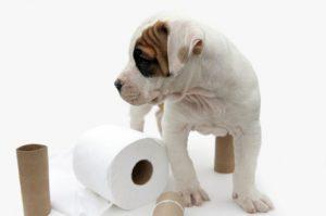 Cada cuánto hace pipí y caca un cachorro