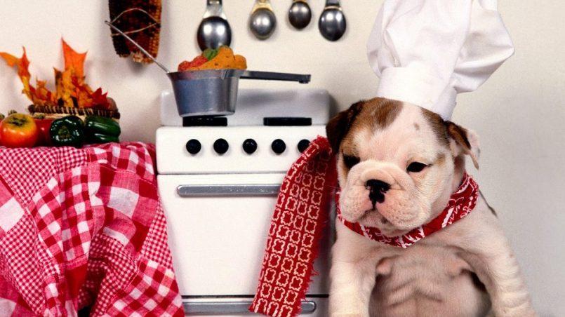 cachorro pierde apetito