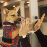 personas con perros ligan más