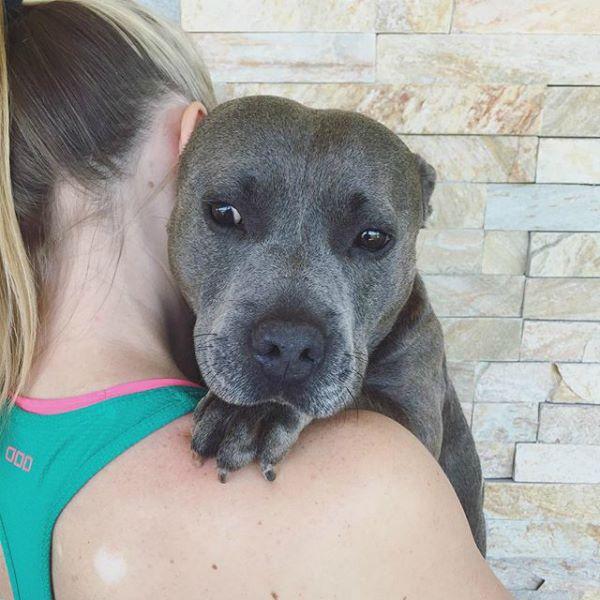 reducir miedo del perro al veterinario