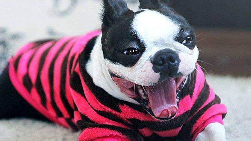 evitar agresividad en perro