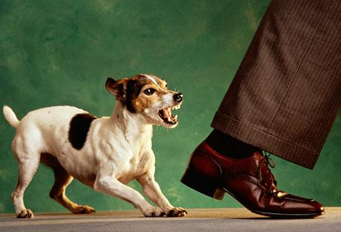 educar a un cachorro