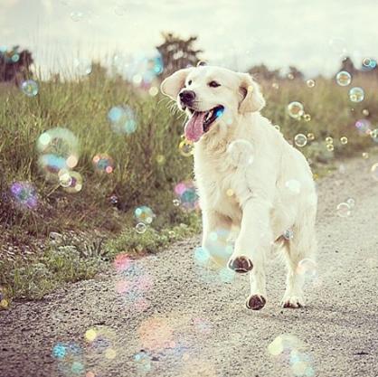 por qué esterilizar a un perro