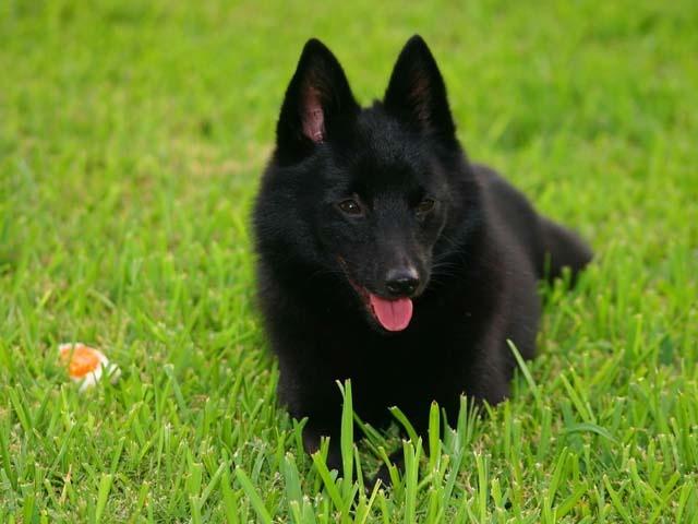 razas de perros raras