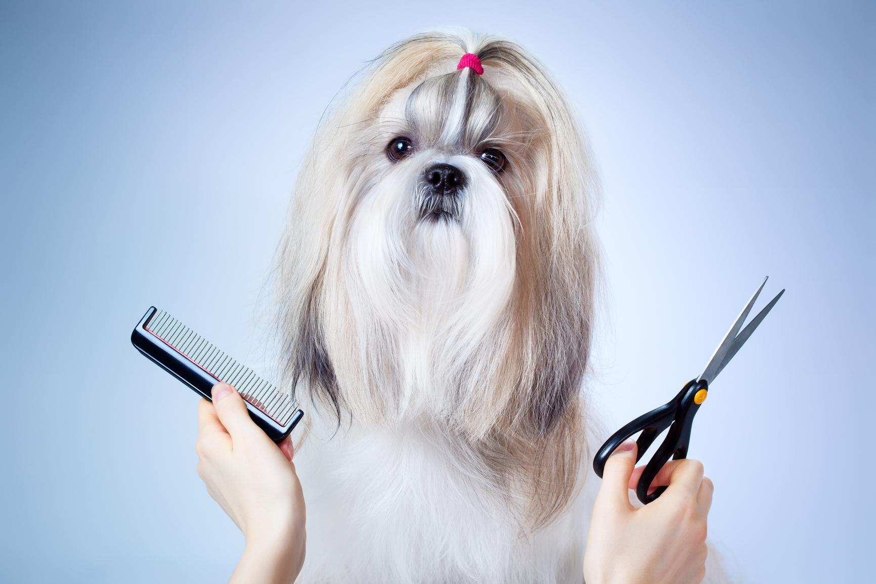 tijeras para perros