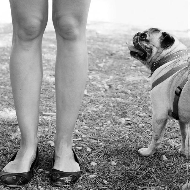 beneficios de tener un perro