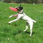 cómo jugar al frisbee con tu perro