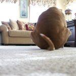 por qué el perro arrastra el culo en el suelo