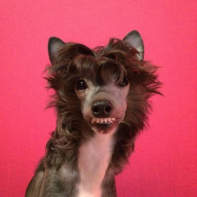 peine o cepillo para el perro