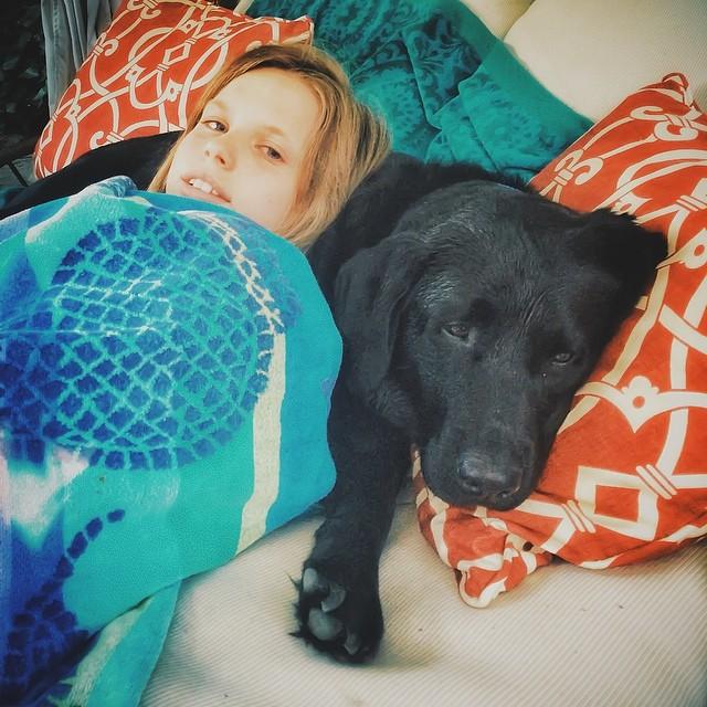 mi hijo quiere un perro