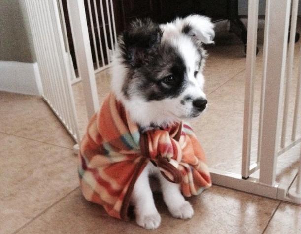 proteger el perro del frío