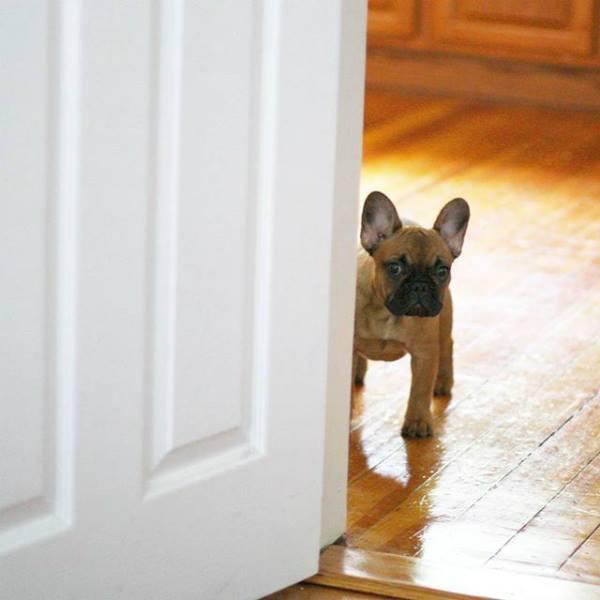 envenenamiento de perros en casa
