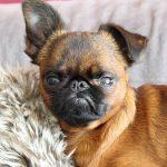 señales de que tu perro vive estresado