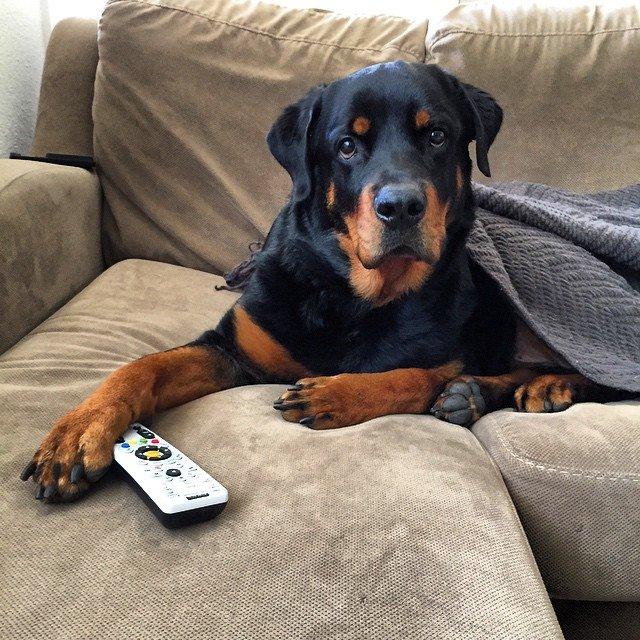 las pilas, un peligro para el perro
