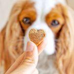 reforzar vínculo entre propietario y perro